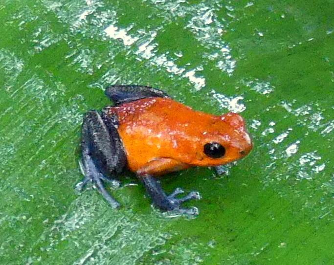 V Frog Kpm FROGS RULE IN S...